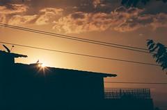 10 (danielmaforte) Tags: fotografiaanalogica pentaxk1000 pentax filmisnotdead kodakcolorplus colorplus200 kodak filme 70210mm guest zoom sundown sun pordosol