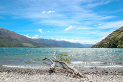Lake Wanaka in Summer (danliecheng) Tags: newzealand southisland wanaka attractions blue clouds driftwood lake landscape mountains nature pebbles sky snowmountains spring summer travel trees trunks visit water waves