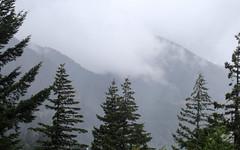 IMG_3494 (kz1000ps) Tags: tour2016 clouds oregon washingtonstate columbiariver border columbiarivergorgenationalscenicarea fog mist grey pinetrees cliffs canyon cascaderange