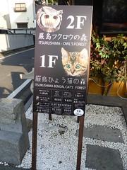 Owl Cafe and Cat Cafe (Stop carbon pollution) Tags: japan  honshuu  hiroshimaken  miyajima