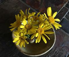 Wild Daisies in Clay Pot (tisatruett) Tags: pottery clay tile ceramic wildflower wildflowers yellow daisy daisies ceramics stoneware rustic country life