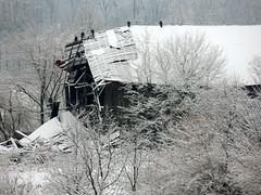 DSCN0744-001 (kellogs621) Tags: shelbycounty ky kentucky snow barns abandoned landscapes
