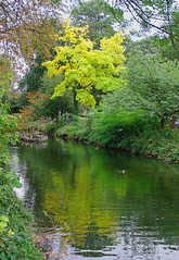 D15606.  Lloyd Park. (Ron Fisher) Tags: water lake pond lloydpark walthamstow e17 london londone17 trees green path pentax pentaxkx tamron tamron18200mm tamronaf18200mmf3563xrdiiildasphericalif park reflections yellow