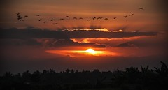 Bali sunset (Alfonso Lpez Rodrguez) Tags: bali indonesia sun sunset sunlight atardecer sol silhouette silueta siluetas bird birds pajaro pajaros clouds nubes color colour colores colours beautiful beautifullandscapes beautifullandscape beautifullight flock bandada aves