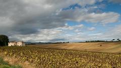 Montepulciano countryside (1 van 2) (crispin52) Tags: italy countryside nikon tuscany montepulciano umbria
