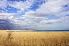 Radiša Živković - Haven for birds (Radisa Zivkovic) Tags: lake nature yellow cane clouds landscape pond nikon scenery europe serbia wetlands d200 plain vojvodina srbija banat carskabara protectedreserve