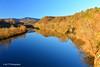 #Flickr12Days (tripod_treker) Tags: blueridgeparkway appalachiantrail dailynaturetnc12 flickr12days