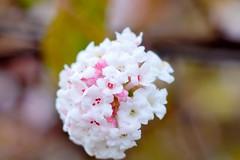 Flowers (Aperture111-Thanks for 700000+ views) Tags: flowers bokeh sony slta65v slt65v me2youphotographylevel1
