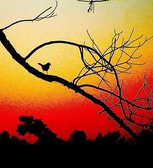 Bird at Sunset (hardmile) Tags: sunset lake bird nature water beautiful birds animals outdoors turtle reptile wildlife alligator lizard forests reptiles alligators