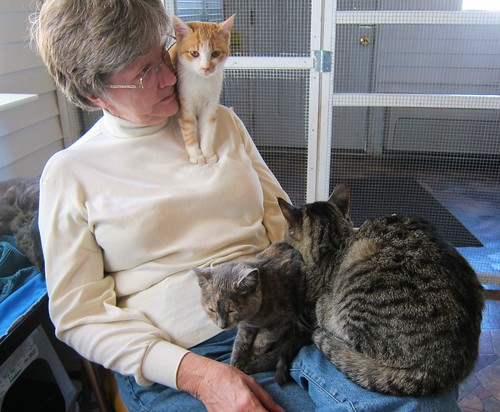 rescue cats pets shelter adopt