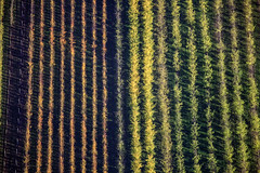 Seasonal Change (Aerial Photography) Tags: autumn trees lines by herbst landwirtschaft aerial rows agriculture bume fruittree luftbild plantage luftaufnahme obstbaum linien reihen parallelen 16112006 fotoklausleidorfwwwleidorfde 5d015798