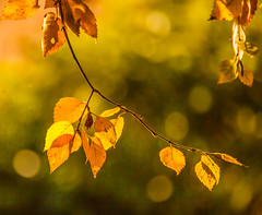 Leaves (Steve-h) Tags: november autumn ireland dublin orange sun sunlight green art tourism nature leaves sunshine yellow eos gold design blog europe bokeh olive sunny tourists bloggers blogging handheld recreation aerlingus allrightsreserved 2012 spotmetering aperturepriority steveh canonef100400mmf4556lisusm canoneos5dmarkii canoneos5dmk2 bestcapturesaoi elitegalleryaoi mygearandme november2012 mygearandmepremium mygearandmebronze mygearandmesilver mygearandmegold mygearandmeplatinum mygearandmediamond galleryoffantasticshots autumn2012 rememberthatmomentlevel4 rememberthatmomentlevel1 rememberthatmomentlevel2 rememberthatmomentlevel3 rememberthatmomentlevel7 rememberthatmomentlevel9 rememberthatmomentlevel5 rememberthatmomentlevel6 rememberthatmomentlevel8 rememberthatmomentlevel10 winnerniceasitgetsleavescontest vigilantphotographersunite vpu2 vpu3 vpu4 vpu5 vpu6 vpu7 vpu8 vpu9 vpu10