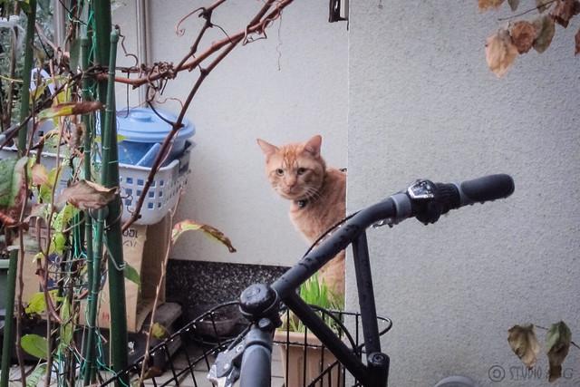 Today's Cat@2012-11-16