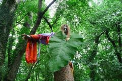 In the forest (Julia Henderson) Tags: nature couleurs vert arbres foulards shaman mystique verdure feuille tissus