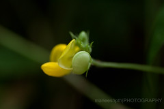 new hope..... (maneeshpth) Tags: flower nature rural canon kerala bloom bud maneesh canon500d tamaron