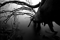 crawling into the water (Andreas Hagman) Tags: longexposure blackandwhite bw lake tree reed nature water monochrome pine dark landscape dead rocks sweden tripod highcontrast dry nopeople le scandinavia sigma1020mm stergtland ndfilter roxen lakescape stjrnorp neutraldensity deadpine nordics silkywater milkywater deadtreeinwater lightcraftworkshopnd500 sonyalphaslta77
