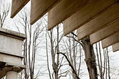 Nordischer Pavillon, Biennale di Venezia (Philip van der Heckhuizen) Tags: venedig giardini sverrefehn nordicpavilion biennalediarchitettura biennaledievenezia