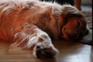 Doggyboy