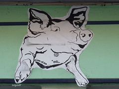 Graff in Grenoble (brigraff) Tags: urban streetart pasteup art animal collage pig sticker arte panasonic urbanart cochon schwein papiercoll fz150 panasonicfz150