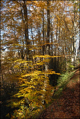 L'automne dans le bois (cumin12) Tags: panoramafotogrfico blinkagain
