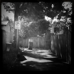 Sydney suburban - back lane games (Albion 'a whole lotta busy' Harrison-Naish) Tags: street trees light blackandwhite monochrome square shadows noiretblanc sydney australia nostalgia squareformat nsw newsouthwales laneway lightandshadow glebe timeless romanticism johnslens hipstamatic blackeyssupergrainfilm streetphotogoraphy
