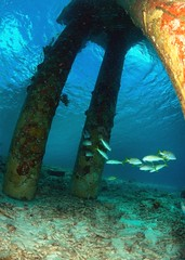 Fishes under the pier (gillybooze (David)) Tags: sea fish coral fisheye reef bonaire thegalaxy ©allrightsreserved snellswindow mygearandme mygearandmepremium mygearandmebronze mygearandmesilver mygearandmegold mygearandmeplatinum mygearandmediamond madaleundewaterimages rememberthatmomentlevel4 rememberthatmomentlevel1 rememberthatmomentlevel2 rememberthatmomentlevel3 rememberthatmomentlevel7 rememberthatmomentlevel9 rememberthatmomentlevel5 rememberthatmomentlevel6 rememberthatmomentlevel8 rememberthatmomentlevel10 vigilantphotographersunite vpu2 vpu3 vpu4 vpu5 vpu6 vpu7 vpu8 vpu9 vpu10