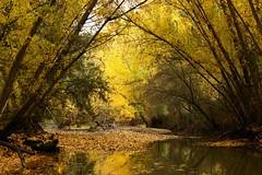 IMG_1145b (berserker170) Tags: otoño puertopeña 550d fall canon tree autumn eos arbol hoja autum garcia sola puerto peña garciasola flickrexploreme