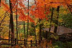 (nobuflickr) Tags: nature japan autumncolors   gifupref  20121114dsc01077