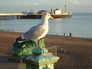 Brighton - Nov 2012