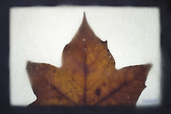 (despite our differences) Tags: stilllife brown blur detail nature beauty photography leaf nikon focus fallen shape d4