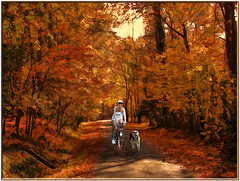 Country Road (Romair) Tags: autumn dog bicycle fallcolors germanshepherd countryroad downunderchallenge rogerjohnson topazadjust topazsimplify topazremask sliderssunday photoshopelements11