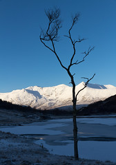 Lone Tree, Loch Coulin, Beinn Eighe (Superali007) Tags: trees winter nature water canon landscape scotland highlands scenic scottish 7d lonetree rossshire beinneighe kinlochewe lochcoulin efs1585mm