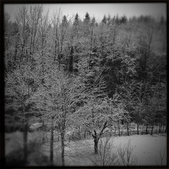 Winter Time (Davide Restivo) Tags: trees winter blackandwhite bw white snow black tree alberi forest aarau noflash neve albero inverno bianco aargau nero biancoenero foresta rombach hipstamatic blackeyssupergrainfilm americanalens