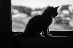 ([p.thiers]) Tags: chile bw window cat contraluz ventana gato temuco counterlight