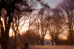 Winter walk (Steve-h) Tags: park trees winter dog mist cold men art tourism nature misty canon eos design morninglight europe frost december glow zoom ivy wideangle frosty tourists gloom recreation aerlingus allrightsreserved 2012 barebranches aperturepriority mirrorlockup iso50 steveh riverdodder canonef1635mmf28liiusm velbontripod december2012 fenches canoneos5dmkii multisegmentmetering canoneos5dmk2 bestcapturesaoi elitegalleryaoi mygearandme mygearandmepremium mygearandmebronze mygearandmesilver mygearandmegold mygearandmeplatinum mygearandmediamond winter2012 rememberthatmomentlevel4 rememberthatmomentlevel1 rememberthatmomentlevel2 rememberthatmomentlevel3 rememberthatmomentlevel7 rememberthatmomentlevel9 rememberthatmomentlevel5 rememberthatmomentlevel6 rememberthatmomentlevel8 rememberthatmomentlevel10 gigatproiiwirelessremotecontrolshutterrelease