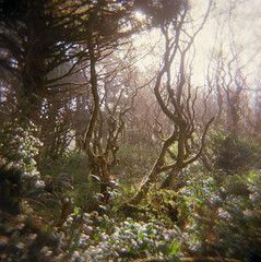 The Whimsical Nature Of A Coastal Forest (J.Sod) Tags: ocean film forest coast washington nationalpark holga pacific kodak toycamera 120format olympicpeninsula 120film pacificocean 100 olympic washingtonstate olympicnationalpark holga120 100asa kalaloch ektar coastalforest kodakektar ektar100