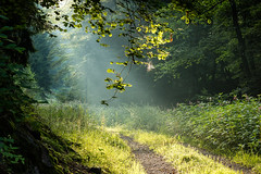 Sonnenstrahlen im Wald - Sunrays in the forest-4232 (Holger Losekann) Tags: wald wood forest sonnenstrahlen sunrays sunbeams sonnenaufgang sunrise bume trees baum tree landschaft landscape