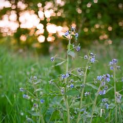 Spring Flowers - Fuji Pro 160NS (magnus.joensson) Tags: park flower green zeiss spring fuji sweden no swedish 100mm hasselblad national pro filters cf planar sterlen 500cm c41 stenshuvud 160ns