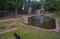 Parc de la Francophonie (lezumbalaberenjena) Tags: quebec city canada 2016 bully boston terrier dog perro chien