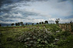 field of dreams (Pejasar) Tags: field mountains dreams rural guatemala green nature plants fence clouds trees