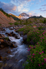 Streamside Beauties (arturstanisz1) Tags: canada britishcolumbia arturstanisz coastalmountains photgraphy phototours workshops travelphotoworkshops