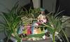 Pequeño jardin (lalex24) Tags: minijardin draculaura clawdwolf clawd huétortájar