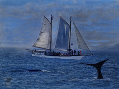 Painting_Whaleboat_Whales (Sy_In_Indy) Tags: digitalpainting composite olympusc200uz grandmanan whalewatching whales rebelle