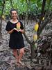Ripe cacao pod, Finca de Cacao (little_duckie) Tags: minca bonda colombia southamerica finca cacao waterfall cascada jungle