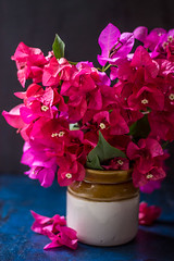 Bougainvillea (Chandrima Sarkar) Tags: bougainvillea flower stilllife ceramic pink indoor photography