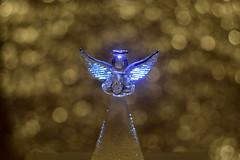DSC_5187 (Milena Z) Tags:          442      angelo angel colore color luce giocodiluci ombra bokeh helios helios442 manuallens senzafiltri vladikavkaz