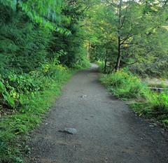 Pathway to Green. (Asif A. Ali) Tags: escape nature green pathway gatineau park meechlake lac parcdelagatineau asifalicom asifaali photography canonpowershotg1xmarkii