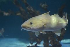 ich finde Dorie! (n.intveen) Tags: aquarium fisch dorie nikon nikond3200