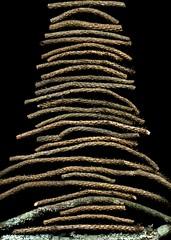 57698.01 Pinus heldreichii (horticultural art) Tags: horticulturalart pinusheldreichii pinus pine bosnianpine stems pile