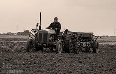 IMG_7251_edited-1 (TripleS2007) Tags: ferguson tractor vintage farming sepia lincolnshire drill drilling autumn field